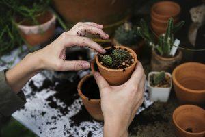 jardinagem-idosos-locamed